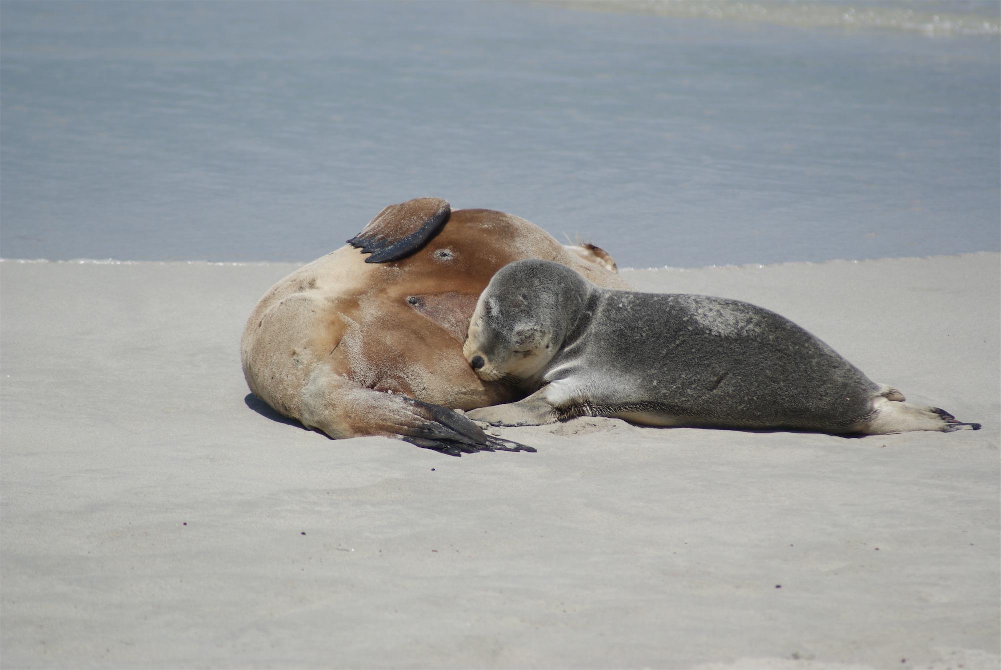 Where Can I Take My Dog On Kangaroo Island